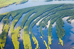 Río del bosque en la inundación, visión superior Imagen de archivo