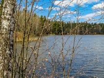 Río del bosque en la primavera temprana Foto de archivo libre de regalías