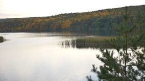 Río del bosque en otoño almacen de metraje de vídeo
