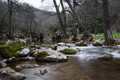 Río del bosque en primavera Fotos de archivo libres de regalías