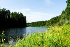 Río del bosque en un día de verano caliente fotos de archivo