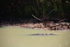 Río del cocodrilo, parque nacional del kakadu, Australia Imagen de archivo libre de regalías