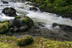 Río del faisán en el Oregon foto de archivo