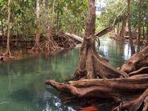Río del mangle cerca del krabi Tailandia Foto de archivo