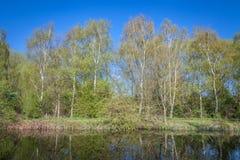 Río del pasto de los árboles de abedul cerca de Londres Fotos de archivo