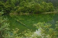 Río del pavo real de Jiuzhaigou fotos de archivo