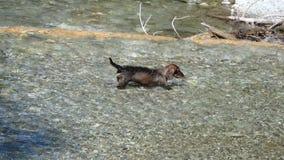 Río del perro y de la montaña almacen de metraje de vídeo