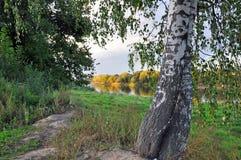 Río Dnepr y abedules Imágenes de archivo libres de regalías
