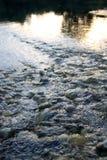 Río Drava, detalle Imagen de archivo libre de regalías