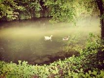 Río durante el verano en un bosque fotografía de archivo libre de regalías