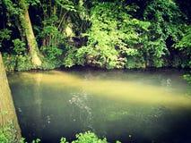 Río durante el verano en un bosque Imagen de archivo libre de regalías