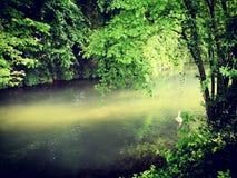 Río durante el verano en un bosque Imagen de archivo