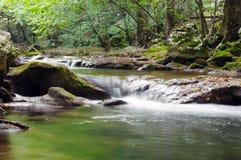 Río en bosque Imagen de archivo libre de regalías