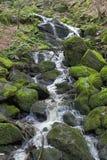 Río en bosque Imágenes de archivo libres de regalías