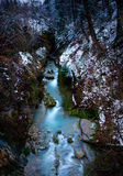 Río en bosque Imagen de archivo