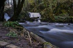 Río en bosque Fotos de archivo