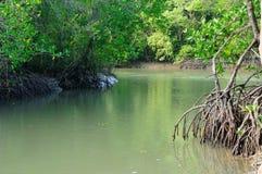 Río en bosque del mangle imagen de archivo