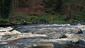 Río en bosque salvaje almacen de metraje de vídeo