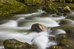 Río en bosque verde Fotos de archivo libres de regalías