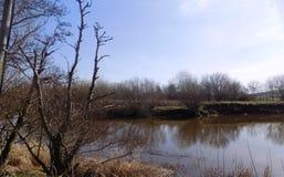 Río en Crookham, Northumberland, Inglaterra Reino Unido Foto de archivo