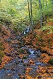 Río en el bosque fotografía de archivo