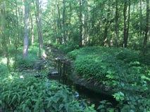 Río en el bosque foto de archivo libre de regalías