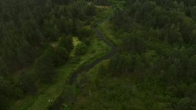 Río en el bosque almacen de video