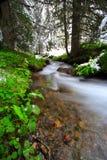 Río en el bosque Imagenes de archivo