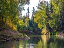 Río en el bosque Imagen de archivo libre de regalías