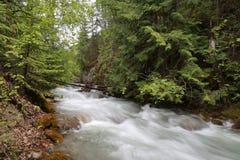 Río en el bosque Imagen de archivo