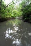 Río en el bosque cerca de Ubud en Bali Fotografía de archivo