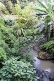 Río en el bosque cerca de Ubud en Bali Imagen de archivo
