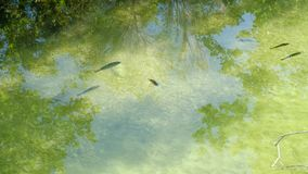 Río en el bosque con los pescados que nadan en un agua clara almacen de metraje de vídeo
