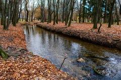 Río en el parkprospect Foto de archivo