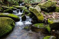 Río en el sendero de la bifurcación del rugido Foto de archivo libre de regalías