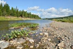 Río en el taiga de la montaña de los Urales septentrionales Fotos de archivo libres de regalías