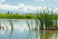 Río en estepa pradera Foto de archivo libre de regalías