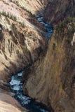 Río en Grand Canyon de Yellowstone Fotos de archivo libres de regalías