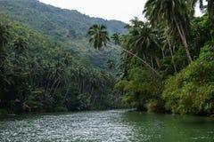 Río en la selva, Costa Rica fotografía de archivo