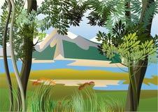 Río en las zonas tropicales Imagen de archivo