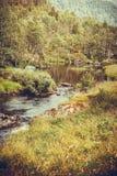 Río en montañas, Noruega Fotografía de archivo