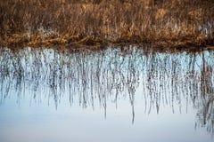 río en orillas verdes del verano con reflexiones del árbol en agua foto de archivo libre de regalías