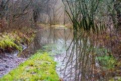 río en orillas verdes del verano con reflexiones del árbol en agua imagen de archivo libre de regalías