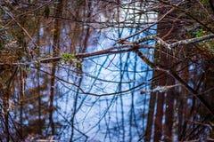 río en orillas verdes del verano con reflexiones del árbol en agua foto de archivo