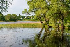 río en orillas verdes del verano con reflexiones del árbol en agua fotos de archivo libres de regalías