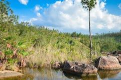 Río en piscinas en el pino de montaña Ridge Forest Reserve, Belice Imágenes de archivo libres de regalías