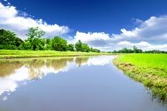 Río en prado del arroz Fotos de archivo libres de regalías