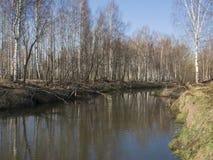 Río en primavera temprana, Rusia de Peksha Fotografía de archivo