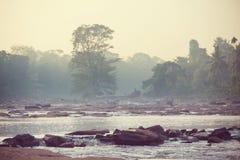 Río en selva imagenes de archivo
