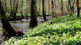 Río en un bosque almacen de metraje de vídeo